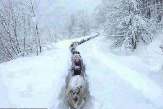 سفر در زمستان