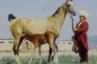 اسب ایرانی از شمال تا جنوب کشور