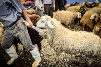ارتباط قاچاق کالا و کمبود گوشت صحیح نیست