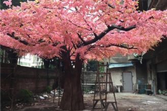 تا حالا به پرورش و کاشت درخت فکر کردید