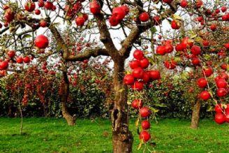 میوه های جنگلی