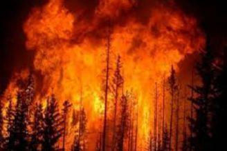 آتش سوزی جنگل ها در شیراز