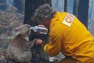 آتش سوزی جنگلهای استرالیا