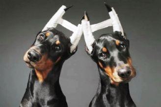 جراحی حیوانات خانگی