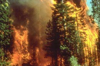 جنگل و آتش