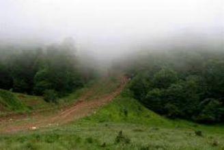 اکوماراتون در جنگل ابر