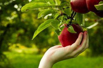 120 میلیون تن تولید سالانه محصولات كشاورزی در كشور