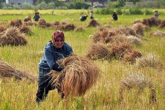 گردشگری در مزرعه
