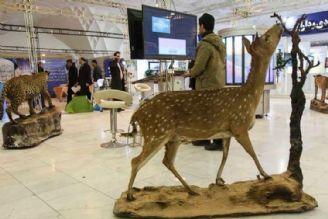 استفاده حیوانات  تاکسیدرمی شده در نمایشگاه