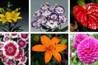 تولید گل و گیاه زینتی در کشور