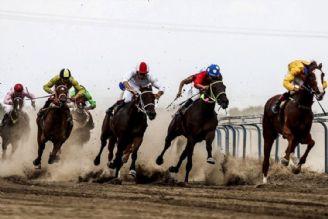دیوان عدالت اداری میكروچیپ گذاری اسبها را به فدراسیون داد